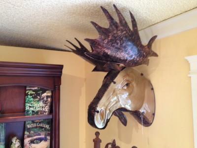 moose_head